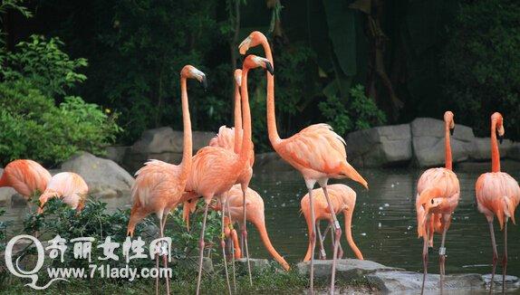 武汉动物园旅游攻略 武汉动物园好玩吗