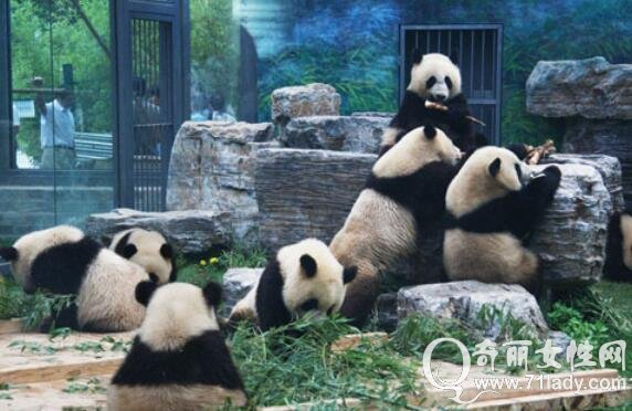 北京十大必去景点——北京动物园