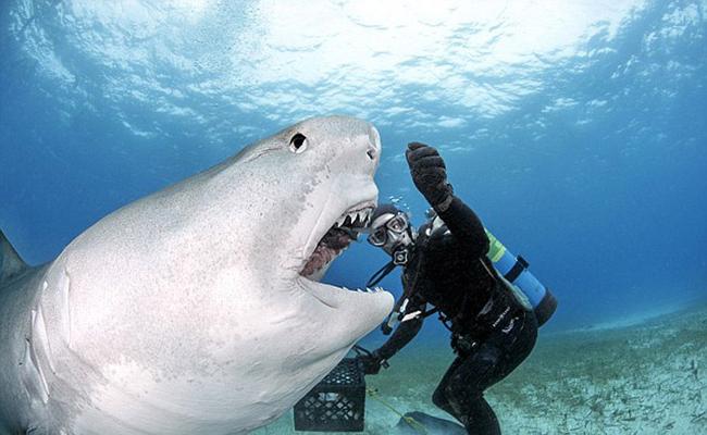 孩子被鲨鱼咬断肢体_徒手挖鲨鱼眼逃生 现实版老人与海你敢信吗